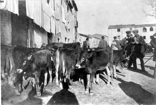 Uns tractants de bestiar