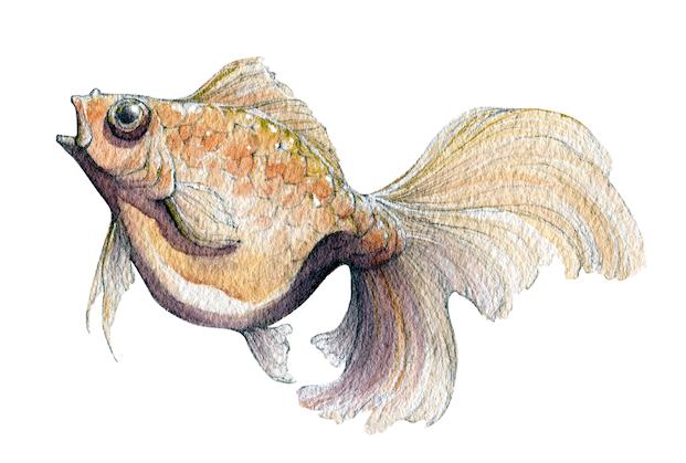 Concurs peix portada